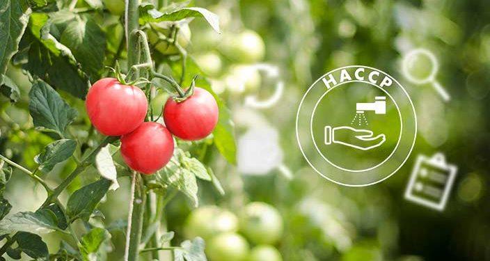 Leitfaden zu PRP und HACCP - flexible Regelungen - Blogbild