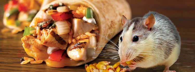 Schädlingsbefall in Lebensmittelbetrieben