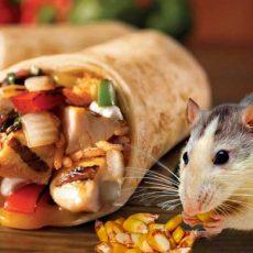 Schädlingsbefall in Lebensmittelbetrieben - Blogbild