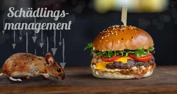 Welche Anforderungen stellt der IFS Food an das Schädlingsmanagement? - Beitragsbild
