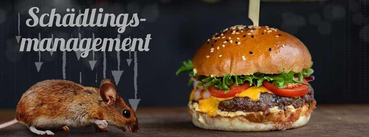 Welche Anforderungen stellt der IFS Food an das Schädlingsmanagement? - Banner